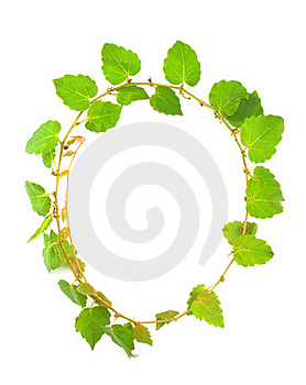 Ivy Circle Royalty Free Stock Photos - Image: 18479978