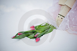 Flowers And Snow Stock Photography - Image: 18482212