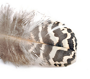 Bird Feather Stock Images - Image: 18492694