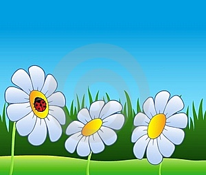 Three Daisies And Ladybug Royalty Free Stock Image - Image: 18493046