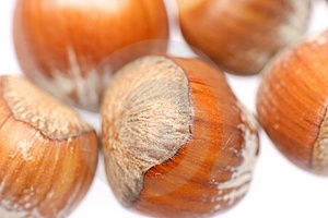 Little Hazelnuts Stock Image - Image: 1853311