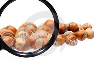 Little Hazelnuts Royalty Free Stock Images - Image: 1853369