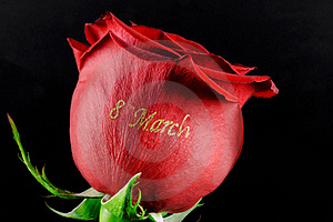 Rose March 8 Royalty Free Stock Images - Image: 18502179