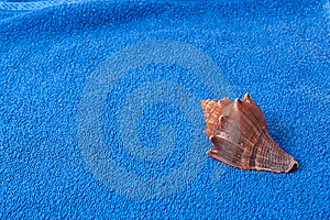 Brown Seashell On A Blue Towel Stock Photo - Image: 18504890