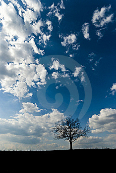 Lone Tree Silhouette Stock Image - Image: 18508221