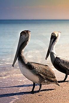 Birds On Beach  Stock Photo - Image: 18517680