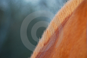 Horse's Mane Royalty Free Stock Images - Image: 18517809