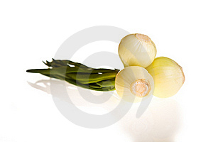 Onion Isolated On White Stock Photo - Image: 18518050