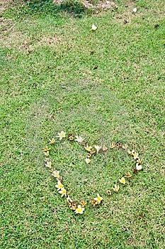 Heart Flower On Yard Royalty Free Stock Image - Image: 18519706