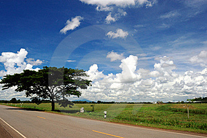 Big Tree Beside Country Road. Royalty Free Stock Photography - Image: 18524007