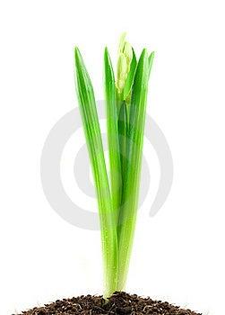 White Flower Stock Photos - Image: 18530323