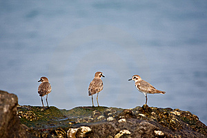 Flock Of Birds Royalty Free Stock Images - Image: 18536019