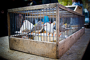 Caged Royalty Free Stock Photography - Image: 18536127