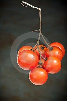 Tomatoe Stock Images - Image: 18552784