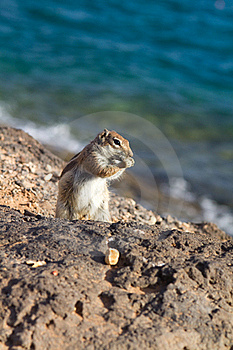 Ground Squirrel Stock Photography - Image: 18562992
