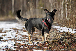 Doggy Stock Photos - Image: 18566033
