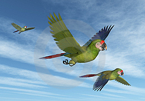 Military Macaws In Flight Stock Images - Image: 18587174