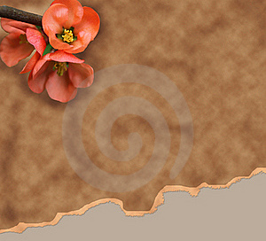 Old Paper Background With Red Flower Royalty Free Stock Photo - Image: 18598505