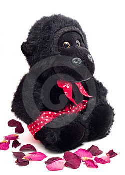 Ape And Dead Rose Pedals Stock Image - Image: 1865171
