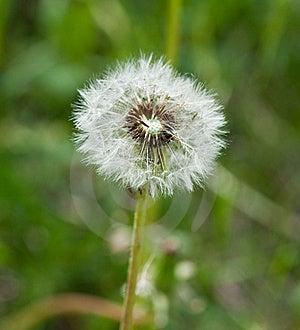 Dandelion Stock Photo - Image: 18626510