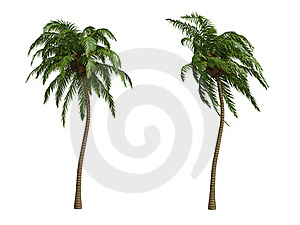 Kokospalmen Royalty-vrije Stock Foto's - Afbeelding: 18629738