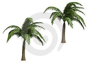 Coconut Palms Stock Photo - Image: 18629740
