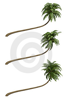 Coconut Palms Royalty Free Stock Images - Image: 18629769