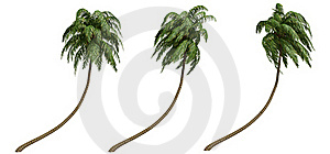 Coconut Palms Royalty Free Stock Image - Image: 18629806