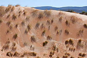Desert Dune Grass Royalty Free Stock Photography - Image: 18632257
