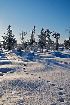 Tracks On Snow Royalty Free Stock Images - Image: 18636129