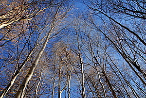 Winter Trees And Blue Sky Stock Image - Image: 18647551