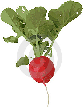 Radish With Leaf And Root -  Image Stock Photos - Image: 18652803