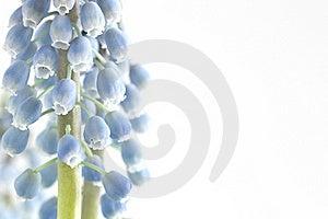 Flower On White Stock Photo - Image: 18664710