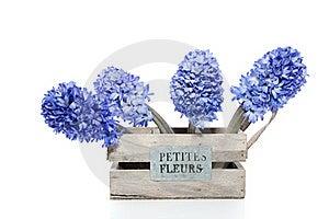 Blue Hyacinths Stock Images - Image: 18672334