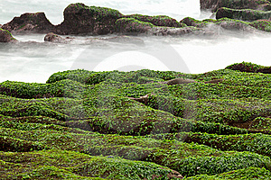 Rocky Seacoast Full Of Green Seaweed Royalty Free Stock Photo - Image: 18677715