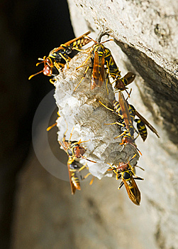 Hornet's Nest In A Tree Stock Photography - Image: 18691882