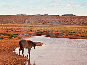 Wild Horse Stock Photo - Image: 18694840