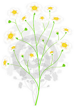 Green Branch With Yellow Flowers Royalty Free Stock Photo - Image: 18699705