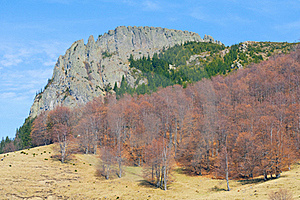 Stone Cliff With Brown Forest Stock Photo - Image: 18720600