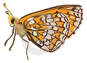 Singleorange Butterfly Illustration Royalty Free Stock Image - Image: 18722956