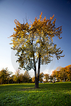 Colorful Tree With Green Grass And Blue Sky Royalty Free Stock Photos - Image: 18725458