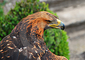 Eagle Stock Image - Image: 18728321