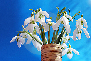 Snowdrops Royalty Free Stock Images - Image: 18729619