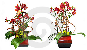 Orchids Royalty Free Stock Photography - Image: 18731697