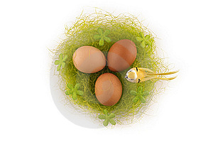 Easter Eggs In The Nest Royalty Free Stock Photos - Image: 18732948