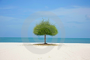 Alone Green Tree On Beach Royalty Free Stock Photography - Image: 18733387