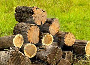 Logs Cut With Chainsaw For Winter Firewood Royalty Free Stock Photo - Image: 18745785