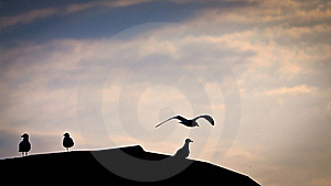 Seagulls On The Roof Stock Photography - Image: 18746172
