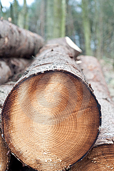 Deforestation - Stack Of Trunks Royalty Free Stock Photography - Image: 18752997
