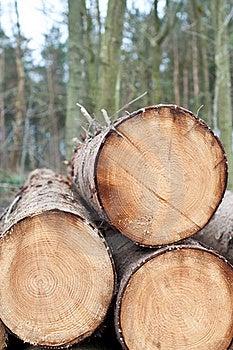 Deforestation - Stack Of Trunks Stock Images - Image: 18753004